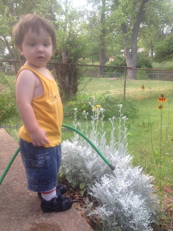 Sammy In Garden