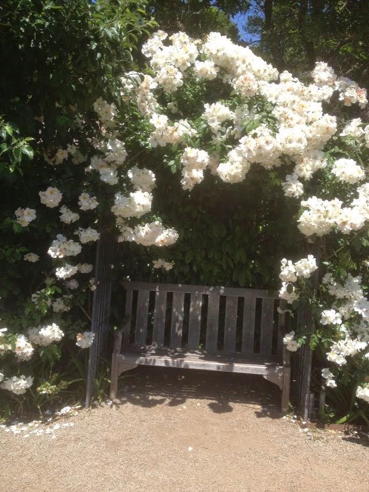 Filoli Rose Arbor bench