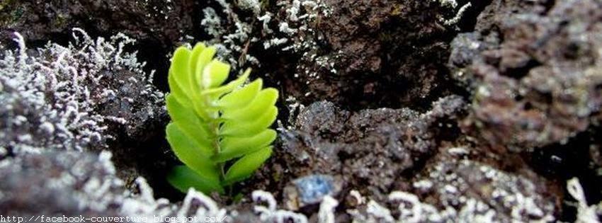 Couverture facebook plantes 1