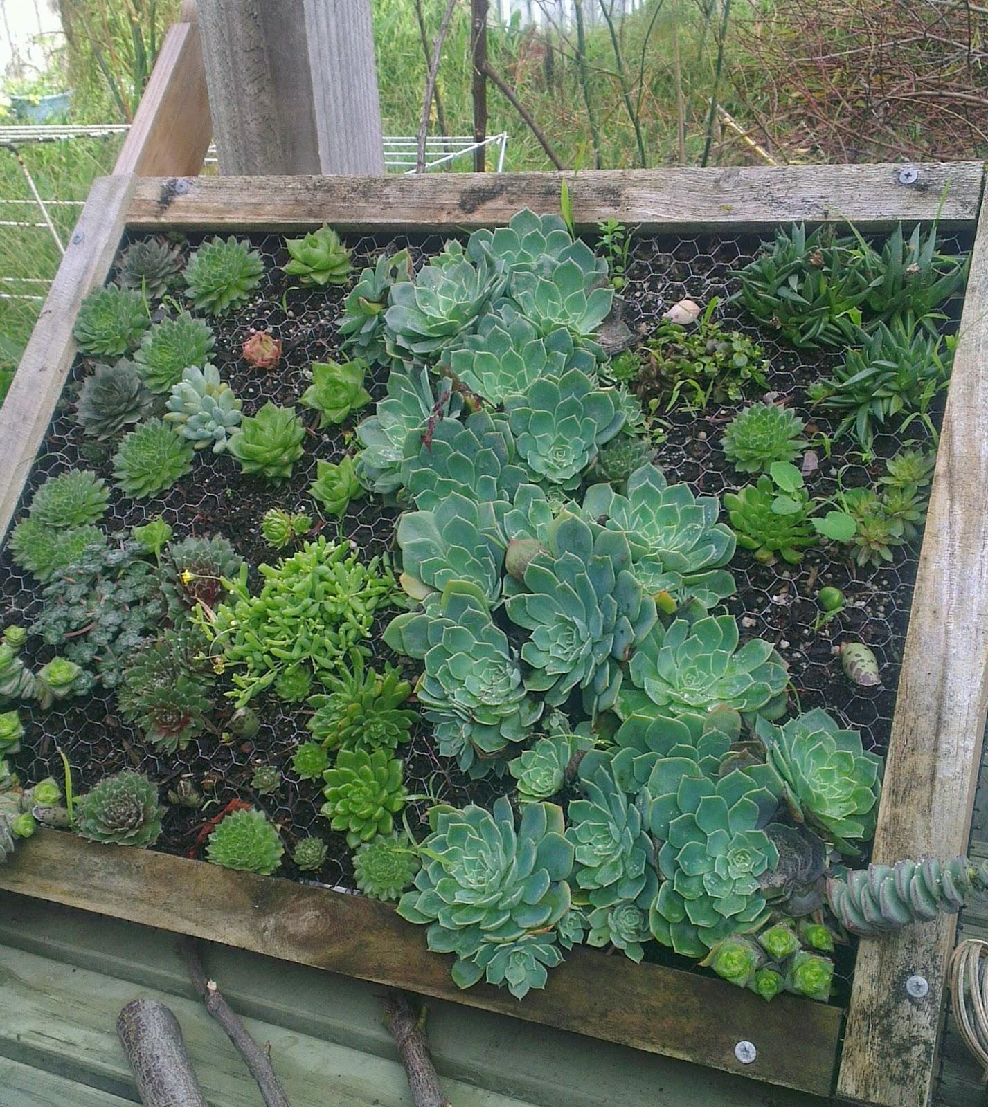 craftyrie my winter garden
