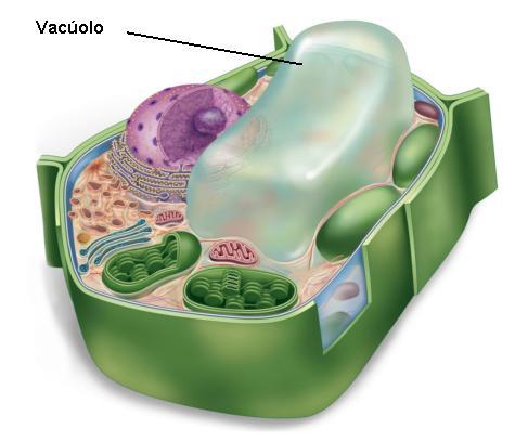 Guia de AprendizagemContractile Vacuole In A Cell