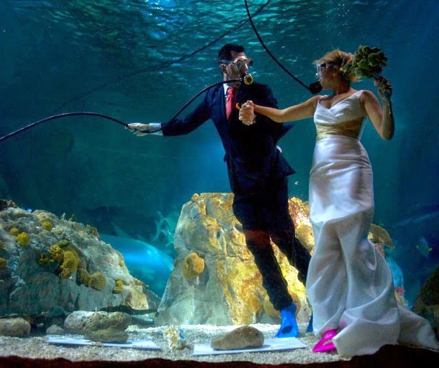 Rogue Blog Sea Life Aquarium Benalmadena Spain