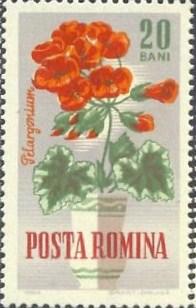 1964 Posta Romana - Muscata, Pelargonie