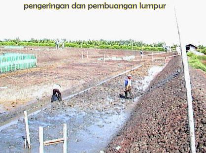 Agro Nusantara - Tahap Pengolahan Tanah Dasar pada Budidaya Tambak Udang Vaname | TON (Tambak Organik Nusantara) | www.agrotaninusantara.com