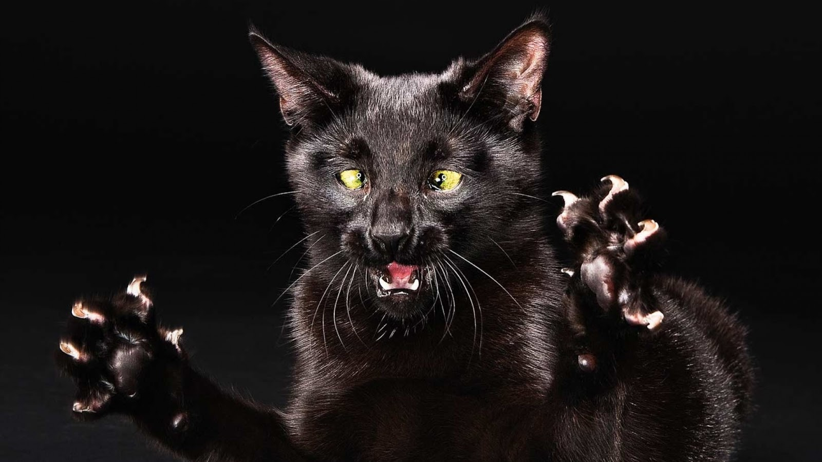 Dark Evil Cat Claw  Wallpapers