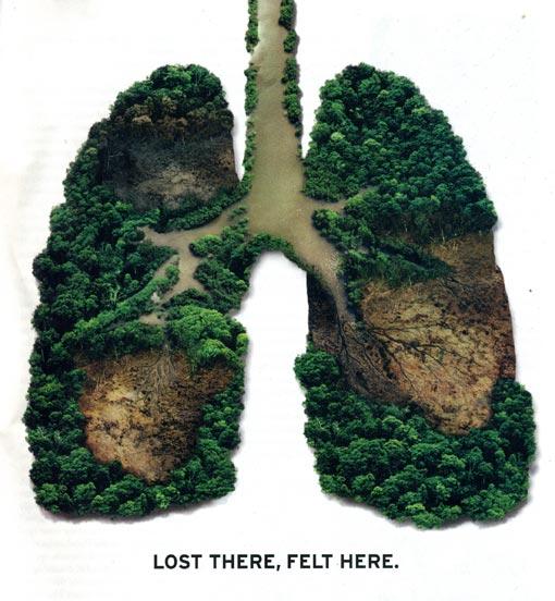 el pulmon del mundo