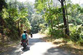petungkriyono, hutan, alami, nature