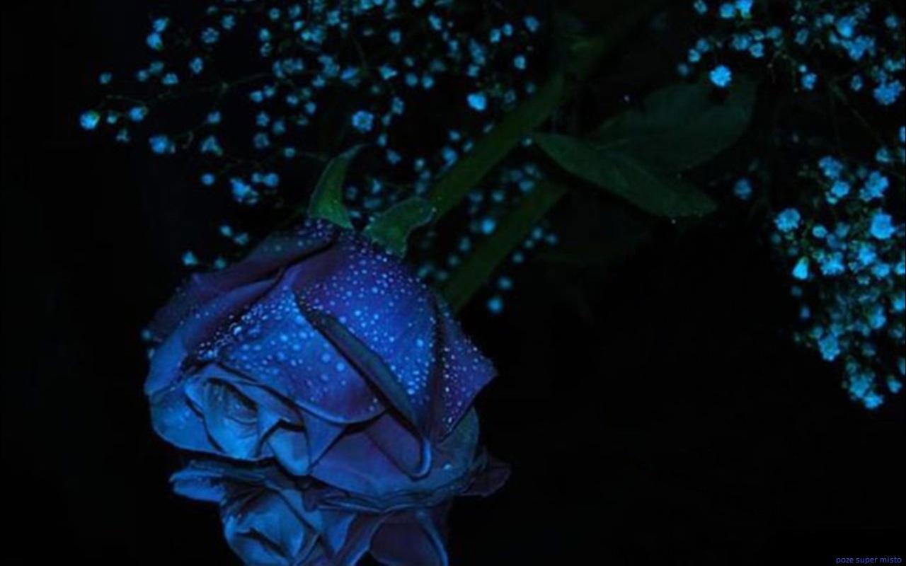 http://2.bp.blogspot.com/-UP5bfnrGKgY/Tq_BxhQ0q9I/AAAAAAAAEdg/ElfL5plCuhQ/s1600/trandafiri_albastri.jpg