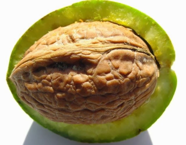 кожура грецкого ореха для удаления волос