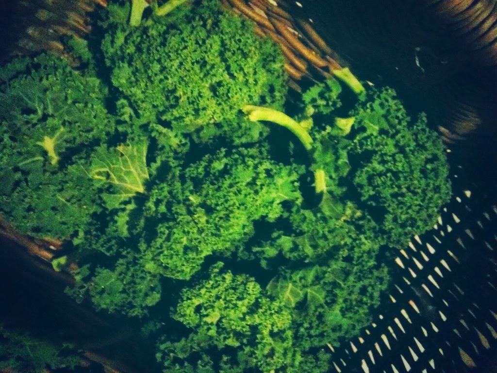 Even in the dead of winter we get a basketful of curly kale.