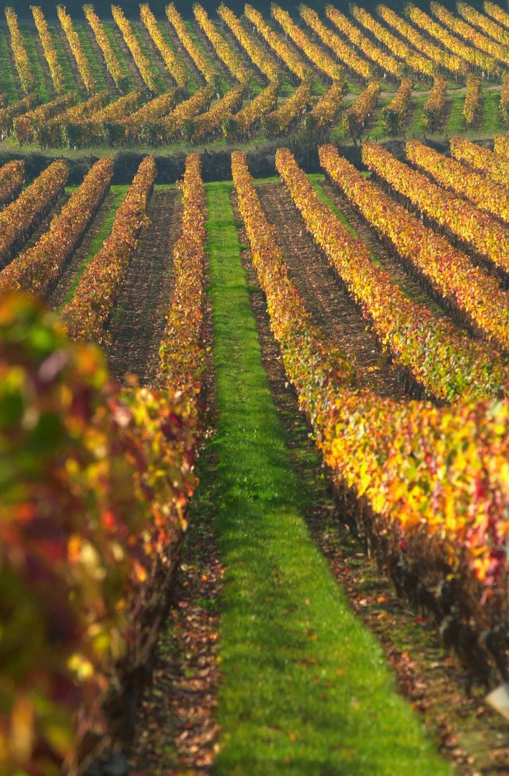Confr rie du vin de cahors juin 2015 for Cahors jardin juin 2015
