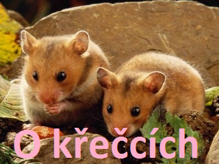 Jackie S Blog Aneb Zivot Krecka