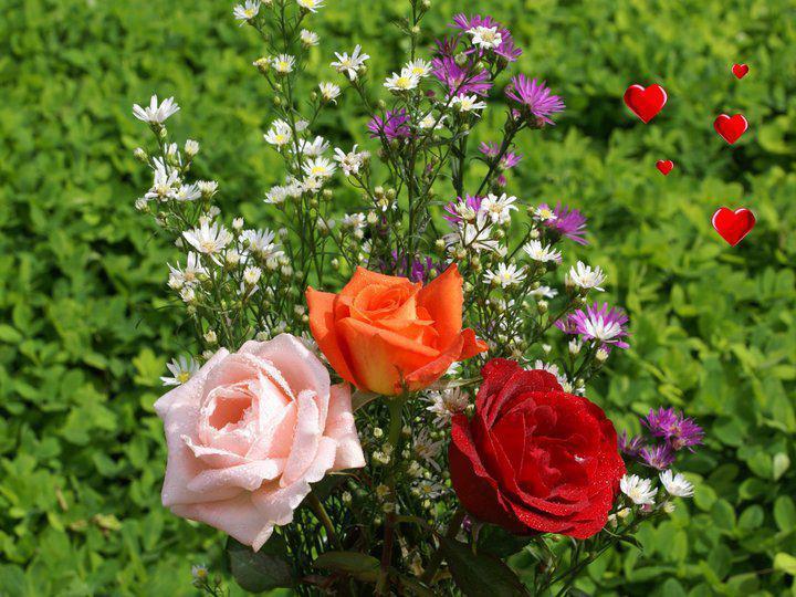 flores no jardim de deus : flores no jardim de deus:Lições de Vida: ROSAS DO JARDIM DE DEUS