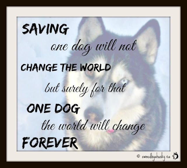 shelter dog quote