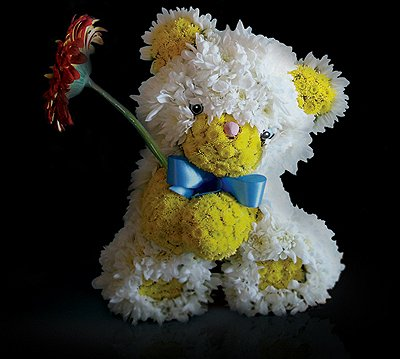 teddy bear made from white daisies and yellow bachelor buttons, against a black background