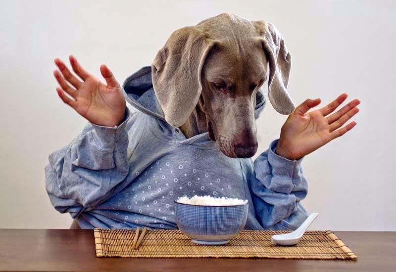 Cachorro pode comer arroz?