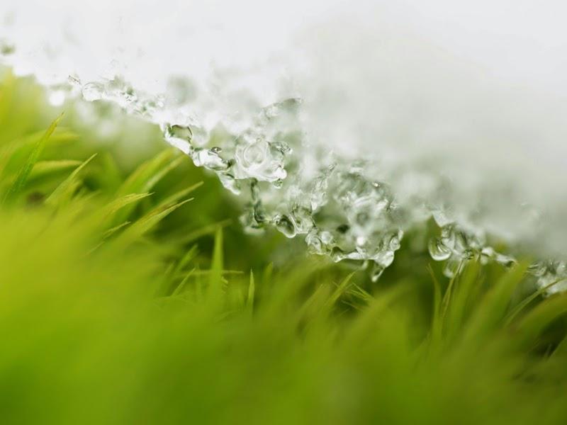dios y ciencia cesped y agua