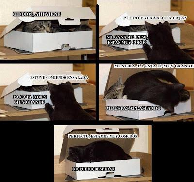 Gatos y cajas, una obseción epic cry memes lolcats
