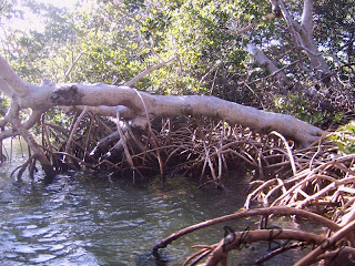 paysages du Mexique Sian Ka'an mangrove blog photo voyage yucatan