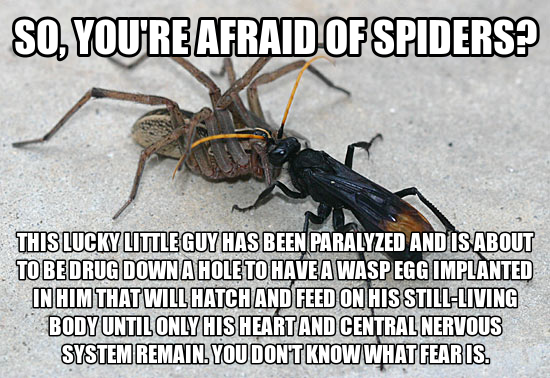 Funny Pictures And Quotes About Fear Of Spiders. QuotesGram