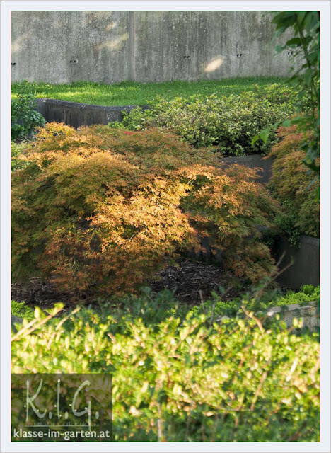 Im Jardin Noir (Parc Andre Citroen, Paris) sind viele japanische Ahorne zu sehen
