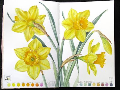 Daffodil Days Sketchbook painting Shevaun Doherty