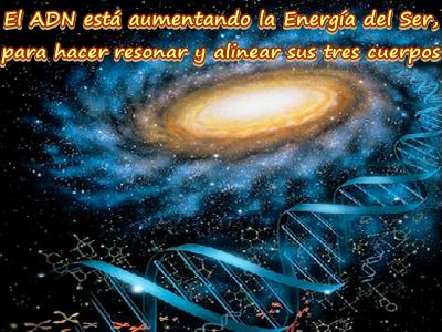 El ADN está aumentando lo mismo que la Pureza en todas sus formas.