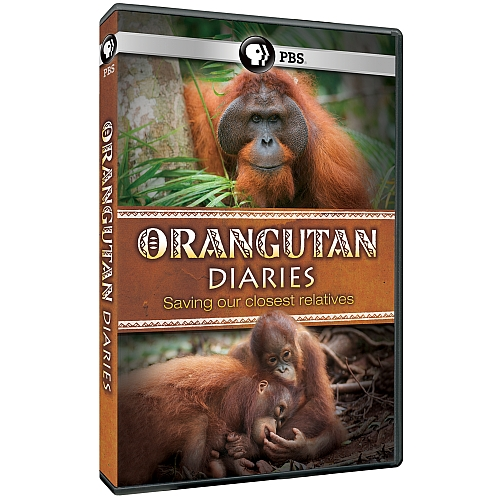 Orangutan Diaries DVD