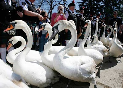 Stratford's Swan Parade Weekend marks arrival of Spring March 31 - April 1