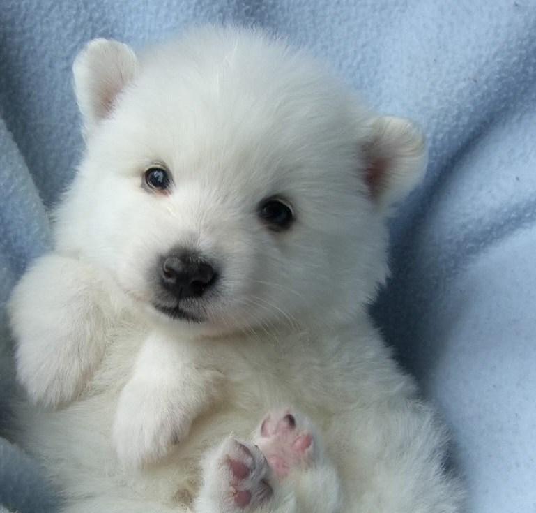 Wild Photos And Quotes Polar Bear Puppy Sweetness