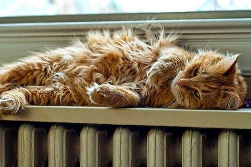 katzen m gen es im winter kuschelig warm katzen kleinanzeigen. Black Bedroom Furniture Sets. Home Design Ideas