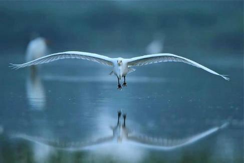 16ο. Τα πτηνά μου...