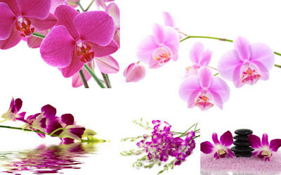 5 fotos de orquídeas de colores en alta resolución gratis