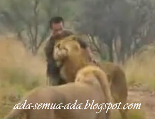 Keunikan singa si raja hutan
