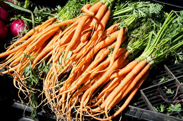 Farm fresh carrots. Michigan Farmers Market at the Capitol 2013. Tammy Sue Allen Photography.