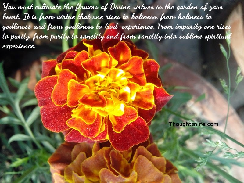 Thoughtsnlife:Cultivate the flowers of Divine virtues in the garden of your heart.