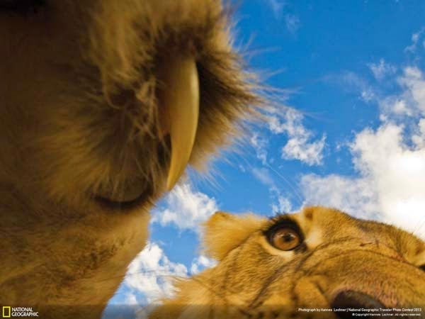 4.) The last thing many animals see - 12 Photos That Prove Nature is Awesome