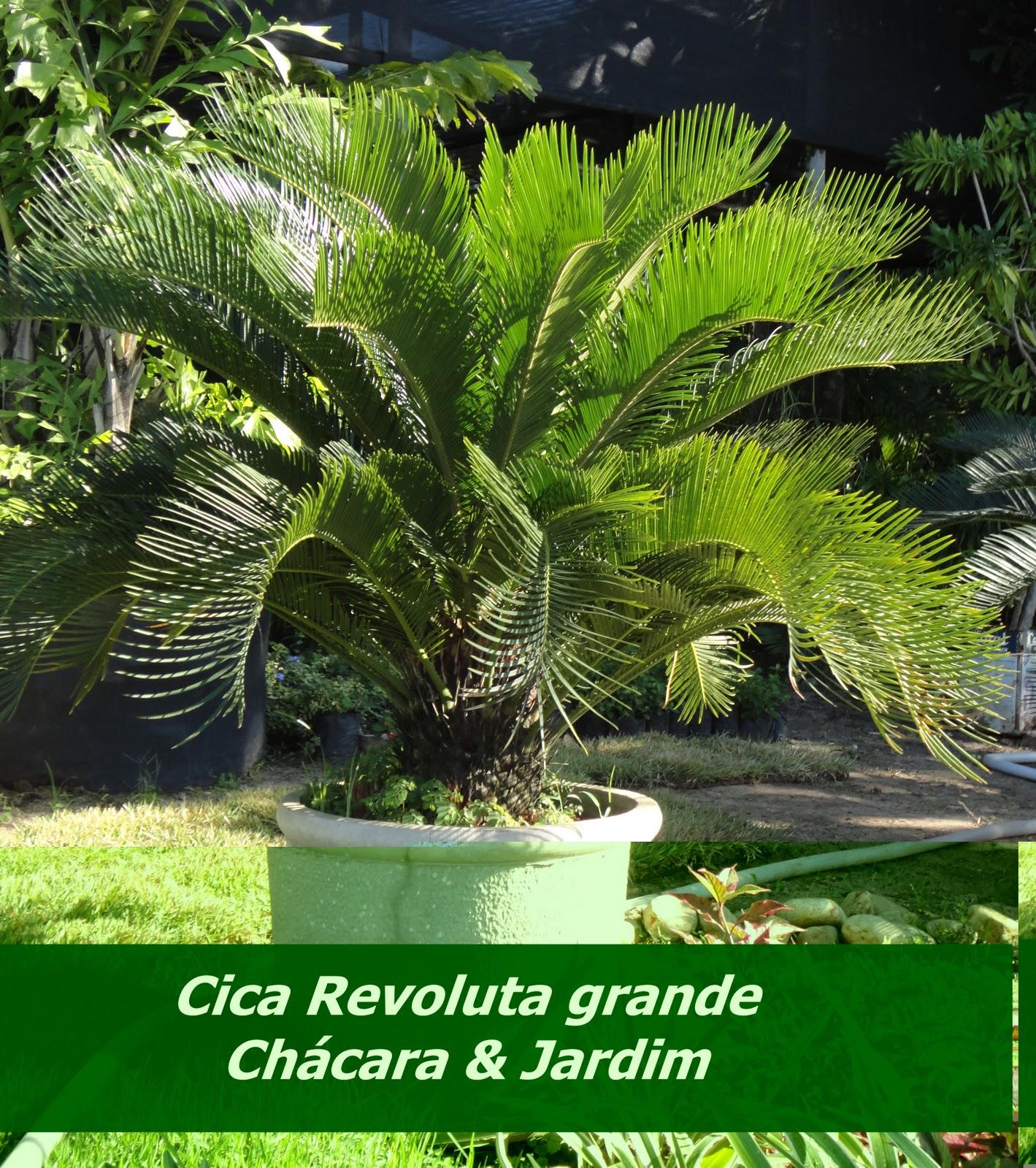 fotos jardim paisagismo:Chácara & Jardim Paisagismo