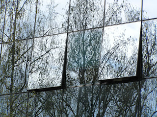 Glass spells danger for birds, birds crash, birds crash glass