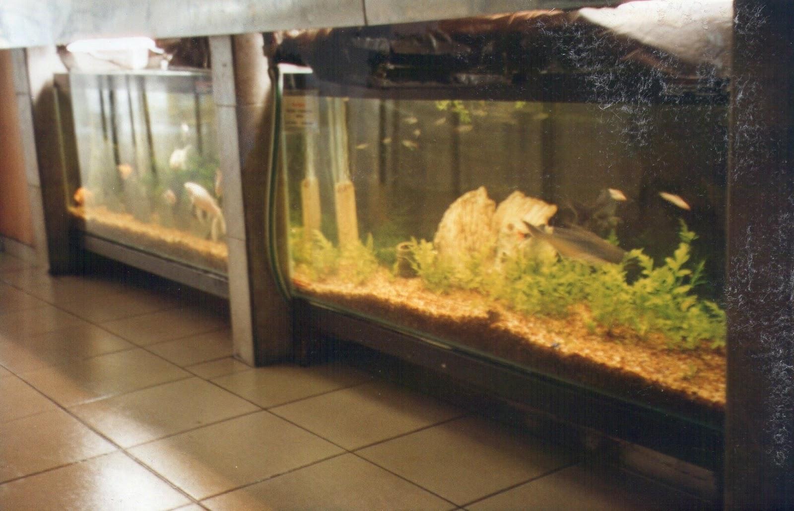 acuarios decorpez formas novedosas de montar la pecera