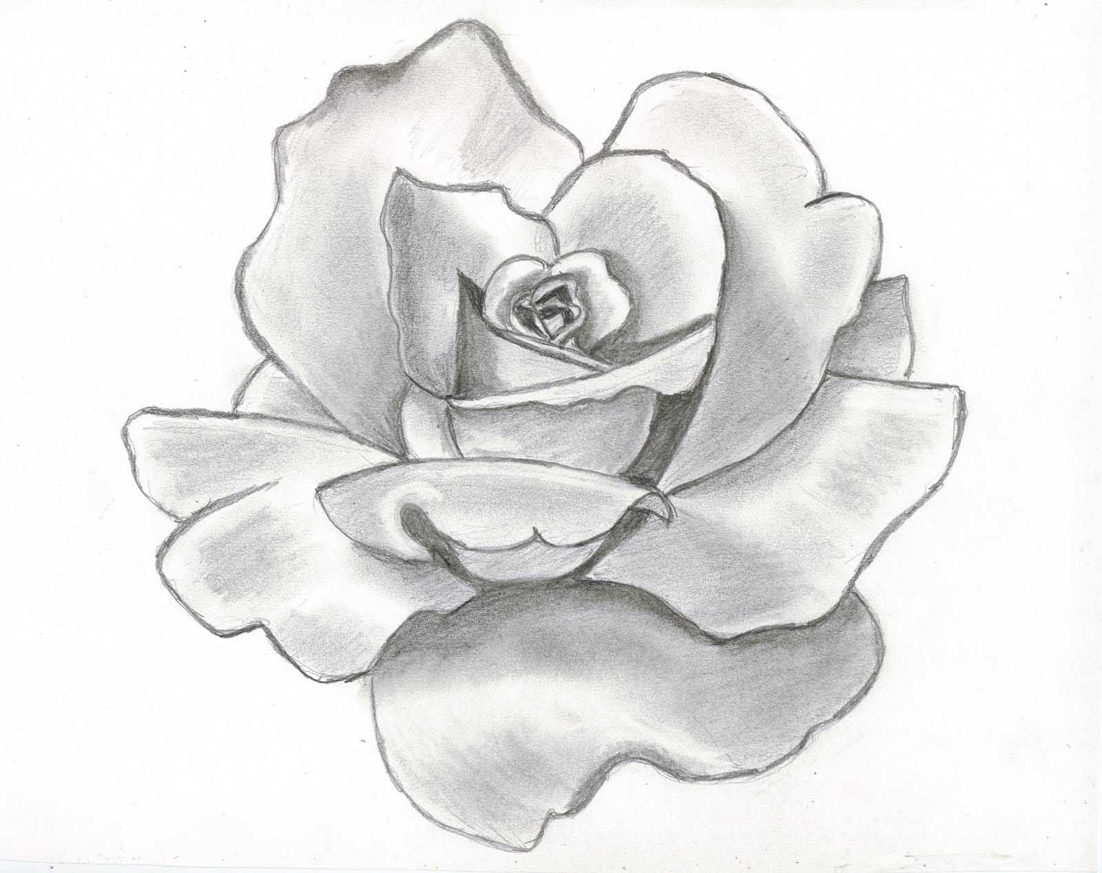 Black And White Flowers Drawings Tumblr