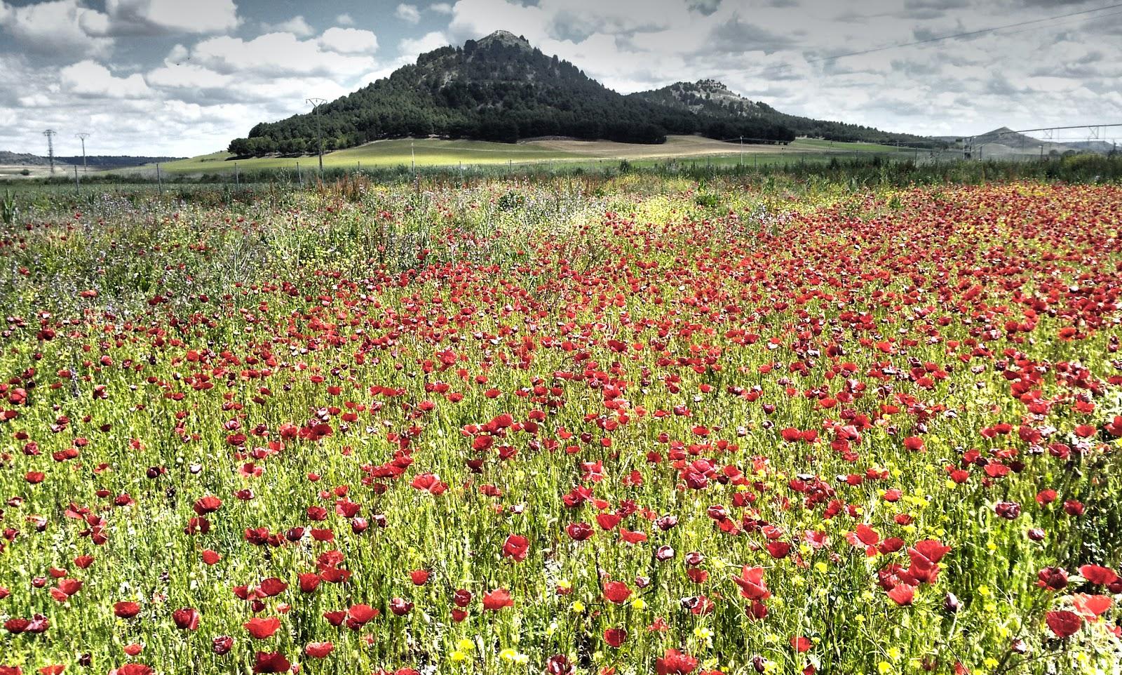 Huerta la Regadera Verde cubierta por un manto de flores