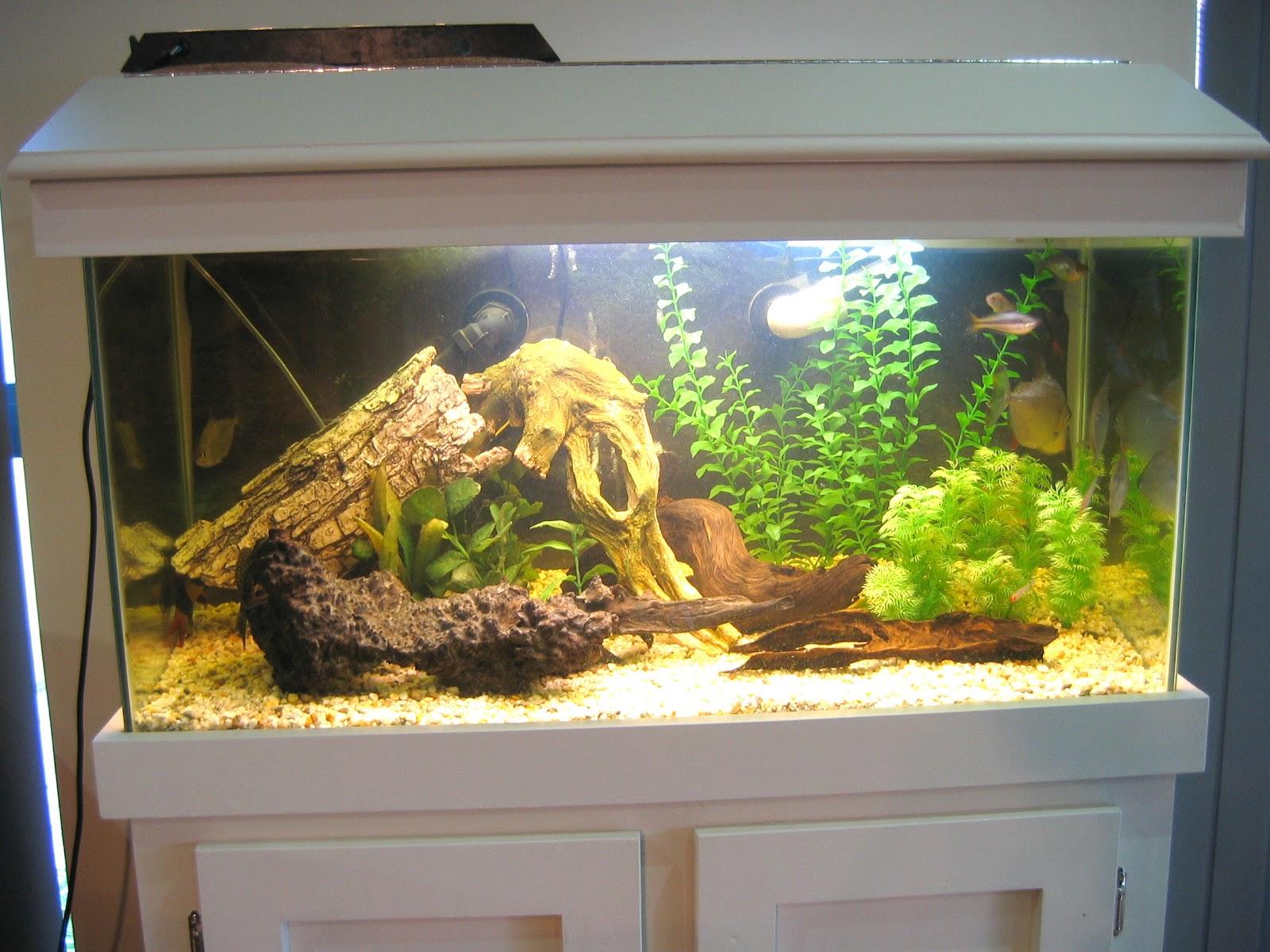 Как сделать аквариум своими руками из стекла: пошаговая инструкция 73