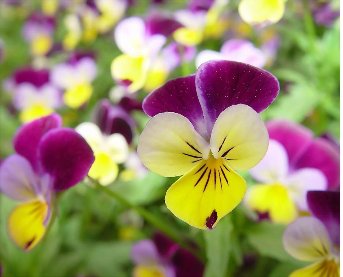 Download Wallpapers Free Beautiful Flowers Wallpaper