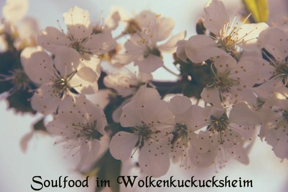 Soulfood im Wolkenkuckucksheim