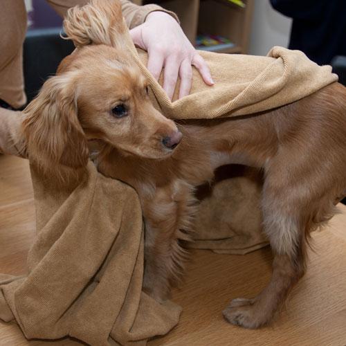 Fare il bagno al cane pets life - Come fare il bagno al cane ...
