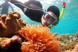 Best Honeymoon Destinations In Australia - Great Barrier Reef 5