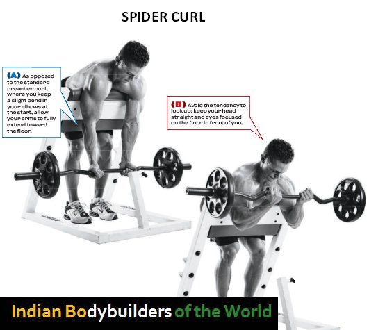 Arms Bodybuilding Exercises Chart