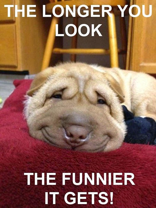 Funny dogs with saying...