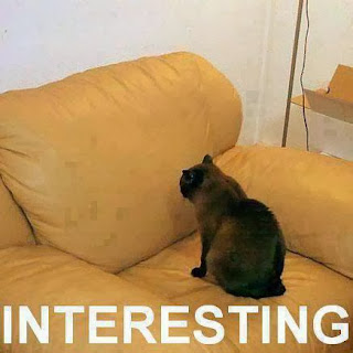 Interesting- funny cat pic - Photo picture
